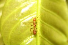 Ant working Stock Photo