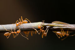 Ant. In the world of ant Stock Images