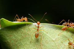 Ant. In the world of ant Royalty Free Stock Images
