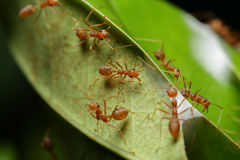 Ant. In the world of ant Royalty Free Stock Photography