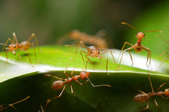 Ant. In the world of ant Stock Photo