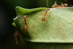 Ant. In the world of ant Stock Image