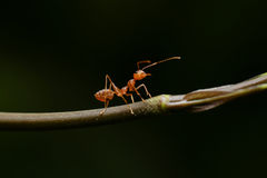 Ant. In the world of ant Royalty Free Stock Image