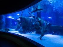 Antalya aquarium Royalty Free Stock Image