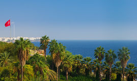 Antalya. Beautiful palm in Antalya coast , turkey Stock Photos
