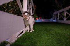 Antalya Cat. At night at pool Stock Image