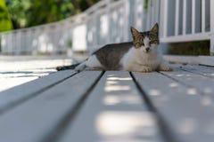 Antalya Cat. On the sun Royalty Free Stock Photo