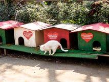Antalya Turcja, Luty, - 22, 2019: Domy dla bezdomnych kotów w śródmieściu Antalya fotografia royalty free