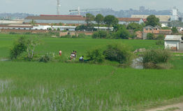 Antananarivo, Μαδαγασκάρη 24 ΝΟΕΜΒΡΊΟΥ 2016: Οι άνθρωποι εργάζονται Στοκ φωτογραφίες με δικαίωμα ελεύθερης χρήσης