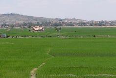 Antananarivo, Μαδαγασκάρη 24 ΝΟΕΜΒΡΊΟΥ 2016: Τομείς ρυζιού σε τρελλό Στοκ Εικόνες