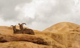 antananarivo Стоковая Фотография RF