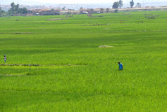 Antananarivo madagascar NOVEMBER 24TH 2016: Folkarbete på royaltyfri foto