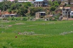 Antananarivo, Madagascar 24 NOVEMBRE 2016: Lavoro della gente sul Fotografia Stock Libera da Diritti