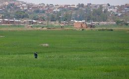 Antananarivo, Madagascar 24 NOVEMBRE 2016: Uomo che lavora al Fotografie Stock Libere da Diritti