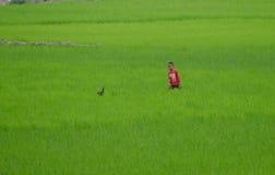 Antananarivo, Madagaskar 24. NOVEMBER 2016: Junge auf der Reis-FI Lizenzfreie Stockbilder