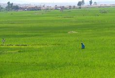 Antananarivo, Madagaskar 24. NOVEMBER 2016: Leutearbeit über lizenzfreies stockfoto
