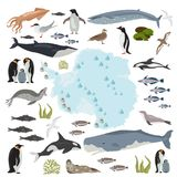 Antarctic, Antarctica,  flora and fauna map, flat elements. Anim. Als, birds and sea life big set. Build your geography infographics collection. Vector Royalty Free Stock Image
