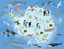 Antarctic, Antarctica,  flora and fauna map, flat elements. Anim. Als, birds and sea life big set. Build your geography infographics collection. Vector Stock Images