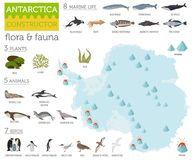 Antarctic, Antarctica,  flora and fauna map, flat elements. Anim. Als, birds and sea life big set. Build your geography infographics collection. Vector Stock Photography