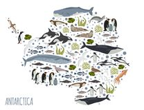 Antarctic, Antarctica,  flora and fauna map, flat elements. Anim. Als, birds and sea life big set. Build your geography infographics collection. Vector Royalty Free Stock Images