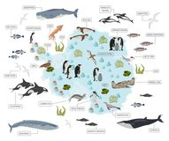Antarctic, Antarctica,  flora and fauna map, flat elements. Anim. Als, birds and sea life big set. Build your geography infographics collection. Vector Stock Photo