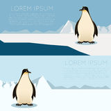 Antarctic banner2 Royalty Free Stock Photo