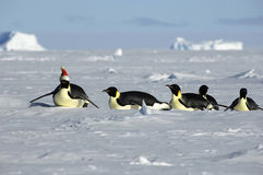 Antarctic Christmas procession Royalty Free Stock Photography