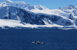 Antarctic continent. Whale in sea - Antarctic continent Stock Photos