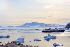 Antarctic cruise ship among icebergs and Gentoo penguins. On the shore of Neco bay, Antarctica Royalty Free Stock Photos