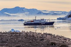 Antarctic cruise ship in the lagoon among icebergs and Gentoo pe. Nguins colony on the rocky shore of Neco bay, Antarctica Royalty Free Stock Photos