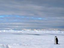 antarctic krajobraz Fotografia Stock