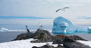 Antarctic landscape Stock Photo