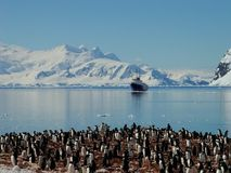 Antarctic penguin group Stock Photos