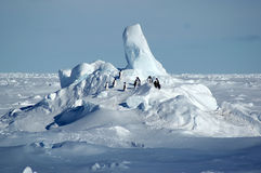 Antarctic penguin group. Small group of adelie penguins in front of a beautiful Antarctic pack ice scenery Stock Images