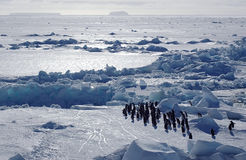 Antarctic penguins. Group of adelie penguins in front of a beautiful Antarctic pack ice scenery Royalty Free Stock Photos