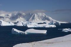 Antarctica, cuverville eiland Royalty-vrije Stock Afbeeldingen