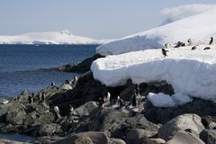 Antarctica, cuverville island. Antarctica and cuverville island's shoreline wtih gentoo penguins stock photo