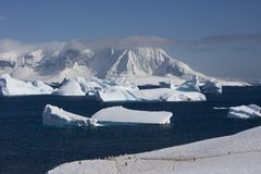 Antarctica, cuverville island Royalty Free Stock Images