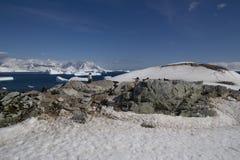 Antarctica, Eiland Cuverville Stock Afbeelding