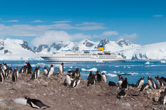 Antarctica penguins and cruise ship. Antarctica penguin colony with cruise liner Royalty Free Stock Photo