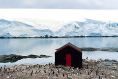 Antarctica - penguins, glaciers, small shack  Stock Photography