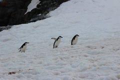 Antarctica - Penguins Stock Photo