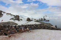 Antarctica - Penguins Stock Image