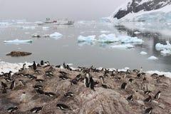 Antarctica - Penguins Royalty Free Stock Photography