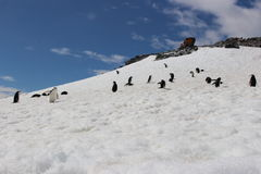Antarctica - Penguins Stock Image