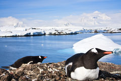 antarctica pingwiny Zdjęcia Royalty Free