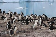 Antarctica - pingwiny Zdjęcie Stock