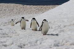 Antarctica - pingwiny Fotografia Stock