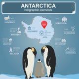Antarctica (Południowy słup) infographics, statystyczny dane, widoki ilustracja wektor