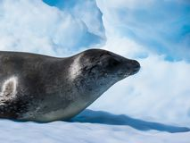 Antarctica in winter. In January 2018 Stock Image